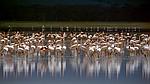 """Экскурсионный тур в Танзанию """"Кратер Нгоронгоро - Серенгети - озеро Маньяра"""" на 4 дня / 3 ночи , фото 3"""
