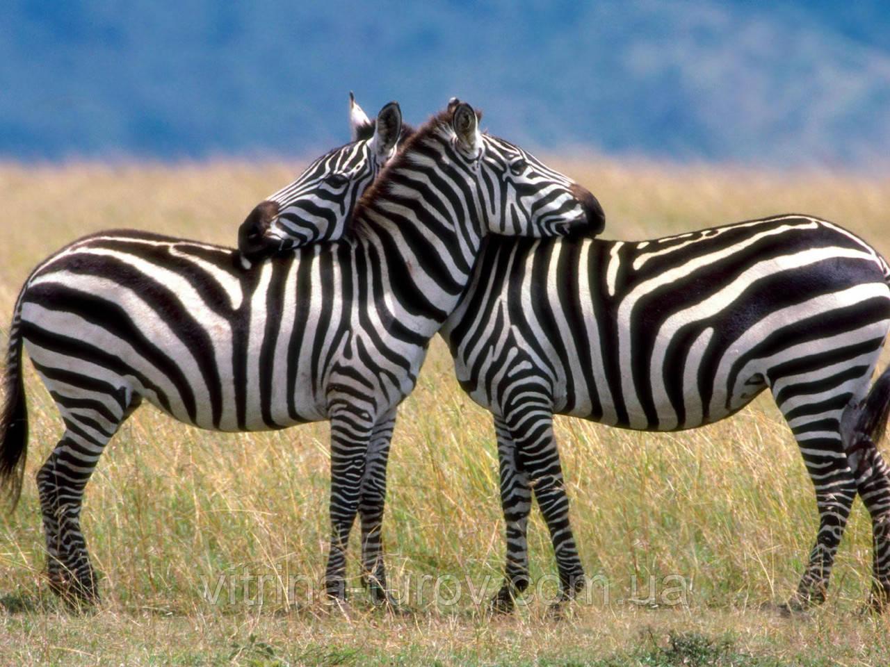 """Экскурсионный тур в Танзанию """"Кратер Нгоронгоро - Серенгети - озеро Маньяра"""" на 4 дня / 3 ночи"""