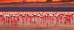 """Экскурсионный тур в Кению """"Большая паятёрка"""" на 5 дней / 4 ночи , фото 2"""