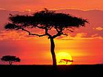"""Экскурсионный тур в Кению """"Большая паятёрка"""" на 5 дней / 4 ночи , фото 4"""