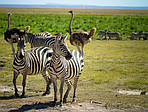 """Экскурсионный тур в Кению """"По следам зебры"""" на 5 дней / 4 ночи, фото 3"""