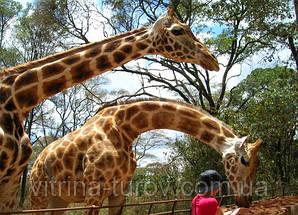 """Экскурсионный тур в Кению """"В погоне за жирафом"""" на 7 дней / 6 ночей"""
