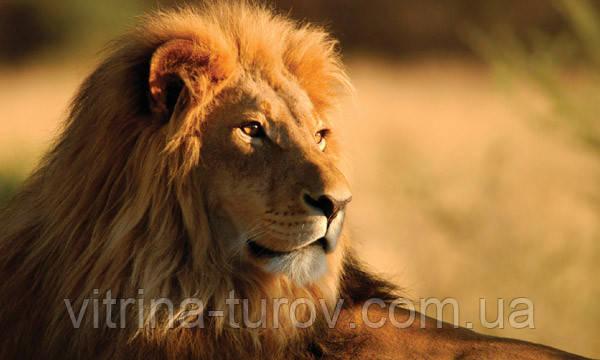 """Экскурсионный тур в Кению """"По следам льва"""" на 7 дней / 6 ночей"""