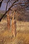 """Экскурсионный тур в Кению """"По следам льва"""" на 7 дней / 6 ночей, фото 3"""