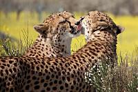 """Экскурсионный тур в Кению """"Программа № 5: Кения - Танзания"""" на 8 дней / 7 ночей"""