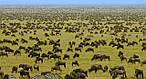 """Экскурсионный тур в Кению """"Программа № 5: Кения - Танзания"""" на 8 дней / 7 ночей, фото 2"""