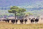 """Экскурсионный тур в Кению """"Программа № 5: Кения - Танзания"""" на 8 дней / 7 ночей, фото 5"""