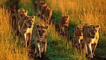 """Экскурсионный тур в Танзанию """"Программа № 4: Кения - Танзания"""" на 7 дней / 6 ночей, фото 5"""