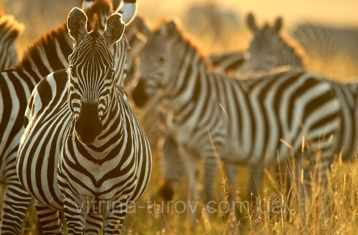 """Экскурсионный тур в Танзанию """"Программа № 4: Кения - Танзания"""" на 7 дней / 6 ночей"""