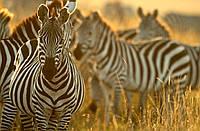 """Экскурсионный тур в Кению """"Программа № 4: Кения - Танзания"""" на 7 дней / 6 ночей"""