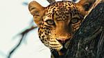 """Экскурсионный тур в Кению """"Лучшее в Кении и Танзании"""" на 12 дней / 11 ночей, фото 4"""