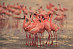 """Экскурсионный тур в Танзанию """"Программа № 5: Кения - Танзания"""" на 8 дней / 7 ночей, фото 2"""