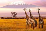 """Экскурсионный тур в Танзанию """"Программа № 5: Кения - Танзания"""" на 8 дней / 7 ночей, фото 4"""