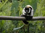 """Экскурсионный тур на Мадагаскар """"Восток и север"""" на 15 дней / 14 ночей, фото 4"""