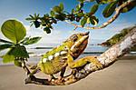 """Экскурсионный тур на Мадагаскар """"Восток и север"""" на 15 дней / 14 ночей, фото 2"""