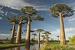 """Экскурсионный тур на Мадагаскар """"Восток и север"""" на 15 дней / 14 ночей, фото 5"""