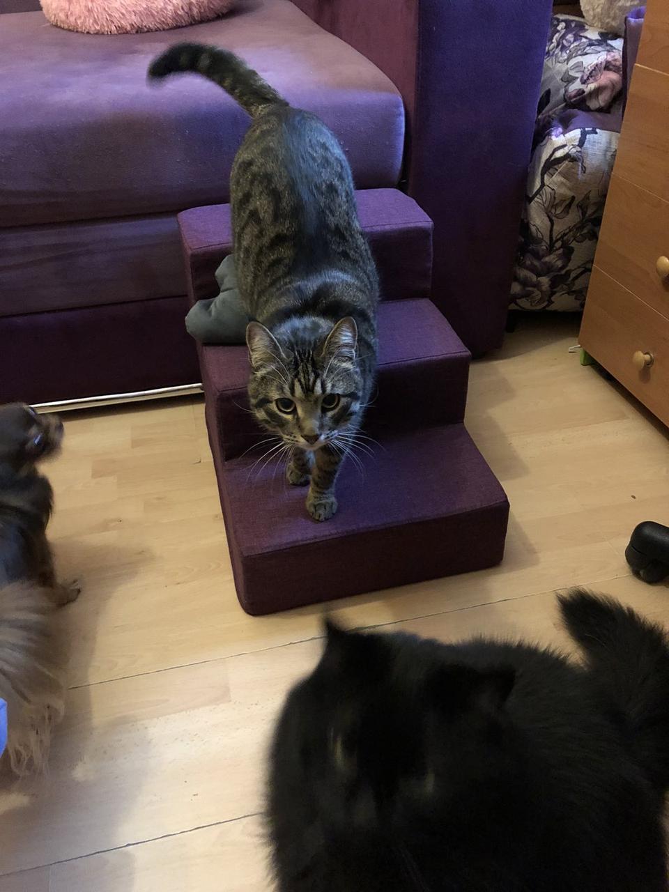 Лесенка для собак ,лесенки и ступеньки для собак, пандус ступеньки для собак, ступеньки, лесенки