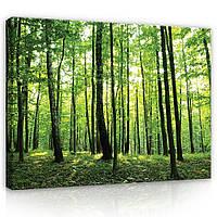Картина на холсте 100х80 см Зеленый лес (PP1128O12) Лучшее качество