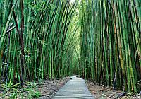 Фотообои 3D 368x254 см Дорожка в бамбуковом лесу 12632P8 Лучшее качество