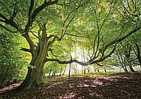 Фотообои 3D 254x184 см Дерево в лесу 11799P4 Лучшее качество