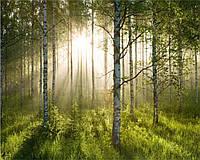 Фотообои 3D 368x254 см Солнечный свет в лесу 74126P8 Лучшее качество