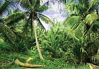 Фотообои 3D 254x184 см Тропический лес (11349P4) Лучшее качество