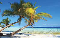 Фотошпалери 3D флізелінові морі 312x219 см Пальми і тропіки (8-005VEXXL) Найкраща якість