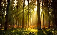 Фотообои 368х254 см Солнечные лучи в лесу (576P8) Лучшее качество