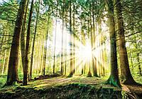 Фотообои флизелиновые 3D 368х254 см Восход солнца в лесу 10143V8 Лучшее качество