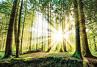 Фотообои флизелиновые 3D 416x254 см Восход солнца в лесу (10143VEXXXL) Лучшее качество