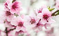Фотообои 3D 368x254 см Цветы вишни (1168P8) Лучшее качество