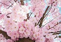 Фотообои флизелиновые 3D цветы 368х254 см Ветки сакуры (13283V8) Лучшее качество
