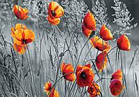 Фотошпалери 3D квіти 368х254 см Сіре поле і червоні маки (11746P8) Найкраща якість
