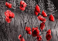 Фотошпалери флізелінові 3D 368x254 см Квіти червоні маки (11763V8) Найкраща якість