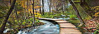 Фотообои 3D 366х127 см Wizard+Genius 436 Дорога в лесу 4 сегмента (7611487062301) Лучшее качество