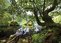 Фотообои флизелиновые 3D 312x219 см Природа - Река в лесу (10222VEXXL) Лучшее качество