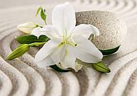 Фотообои 3D цветы 368x254 см Лилия на песке (3522P8) Лучшее качество