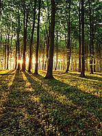 Фотообои флизелиновые 3D 206x275 см Мечта в лесу (2225VEA) Лучшее качество