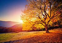 Фотообои 3D 368x254 см Осеннее дерево 12640P8 Лучшее качество