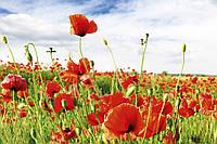 Фотошпалери флізелінові 3D Квіти 375х250 см Червоні маки (MS-5-0090) Найкраща якість