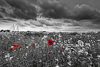 Фотошпалери флізелінові 3D Квіти 375х250 см Маки на чорно-білому тлі (MS-5-0091) Найкраща якість