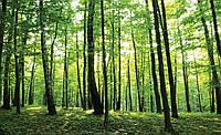 Фотообои флизелиновые 3D 416х254 см Зеленый лес (186VEXXXL) Лучшее качество