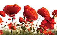 Фотошпалери флізелінові 3D 254x184 см Квіти червоні маки 1639V4 Найкраща якість