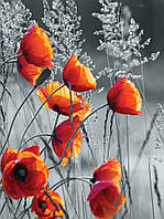 Фотошпалери 3D квіти флізелінові 206х275 см Сіре поле і червоні маки (11746VEA) Найкраща якість