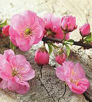 Фотообои флизелиновые 3D Цветы 225х250 см Сакура (MS-3-0109) Лучшее качество