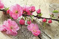 Фотообои флизелиновые 3D Цветы 375х250 см Сакура (MS-5-0109) Лучшее качество