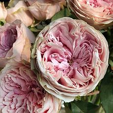Срезочные троянди