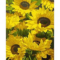 Набор картина по номерам Солнечные цветы 40х50см, акриловые краски, кисти, холст, фото 1