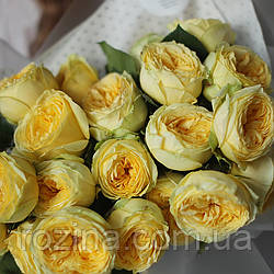 "Саджанці троянд ""Каталіна"""