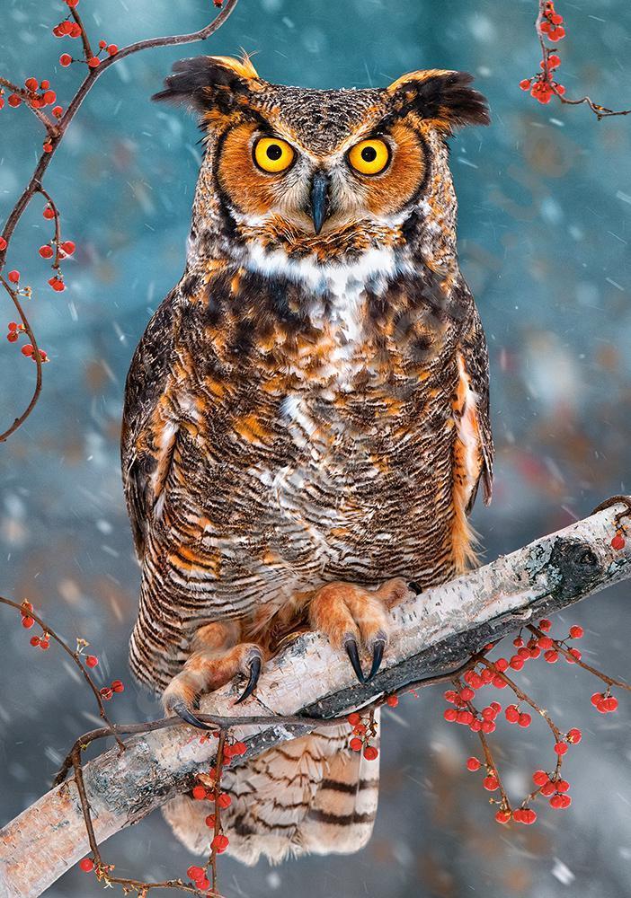 "Пазли 500 їв. Castorland ""Great Horned Owl"" 52387"